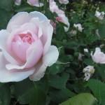 薔薇とアンティークワンピース