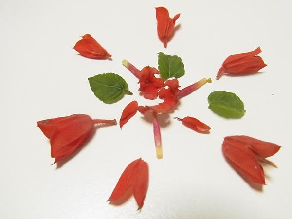 赤い花と葉っぱの花火