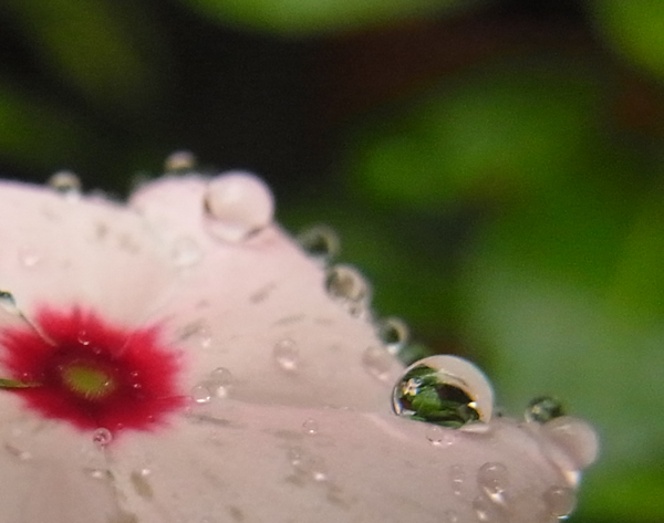 雨の中に咲く花