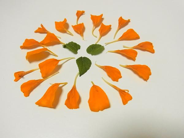 オレンジはなと葉っぱの花火