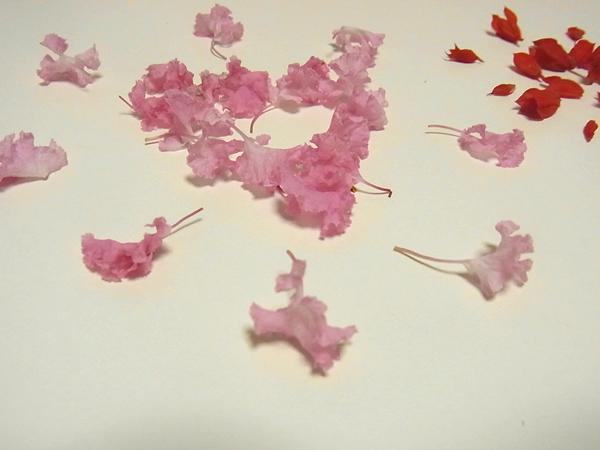 ピンク花の花火
