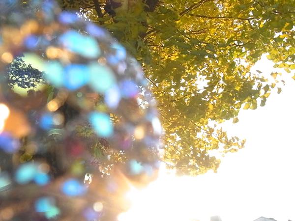 ヨーロッパアンティークブローチと銀杏の木