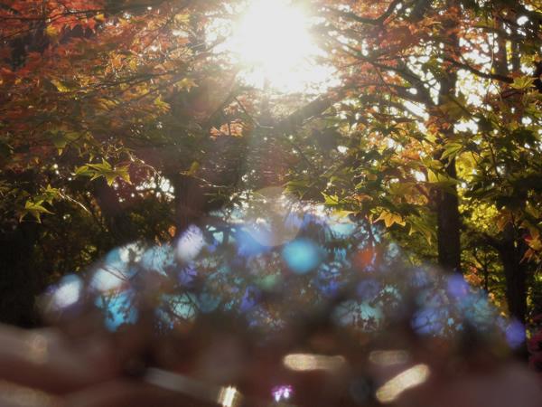 森の中のアンティークブローチ