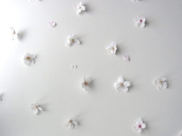 テーブルに並べた桜の花