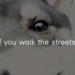 街を歩けば 18