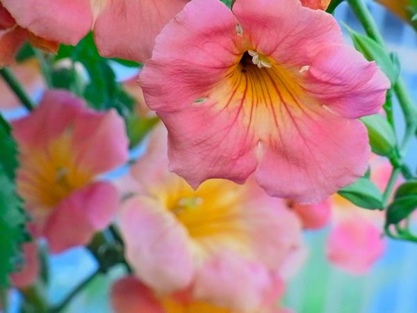 夏のオレンジの花