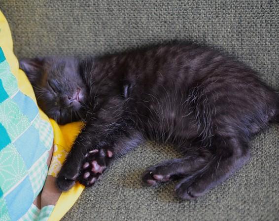 眠る黒い子猫