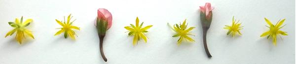 黄色とピンクの小花