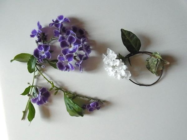 紫と白の花文字