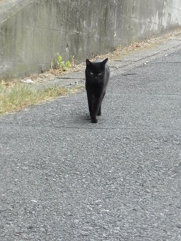 街を歩けば黒猫が歩く