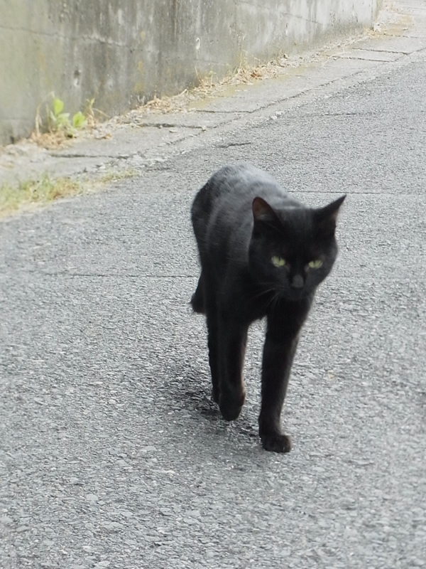 黒猫が街を歩く