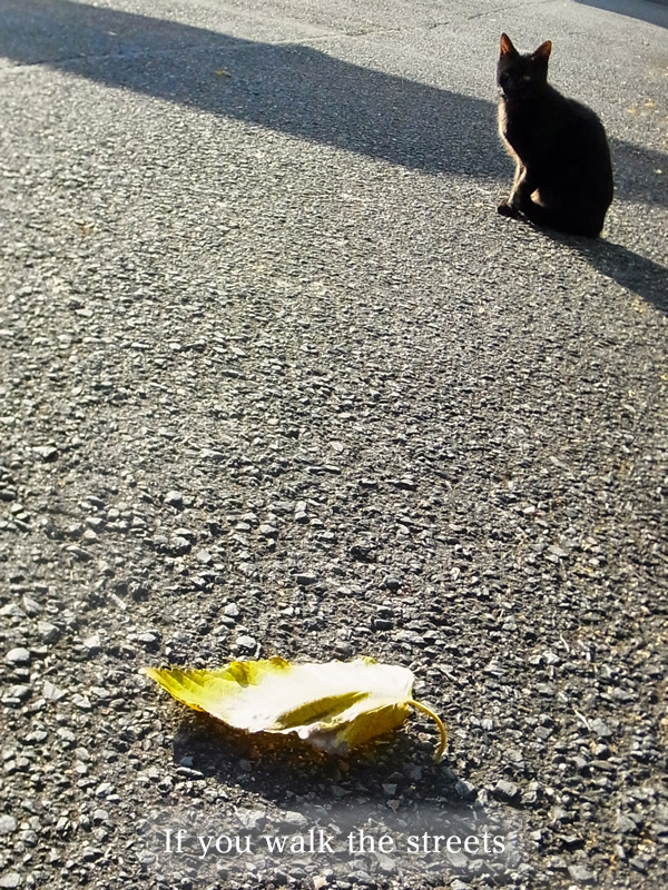 街を歩けば猫