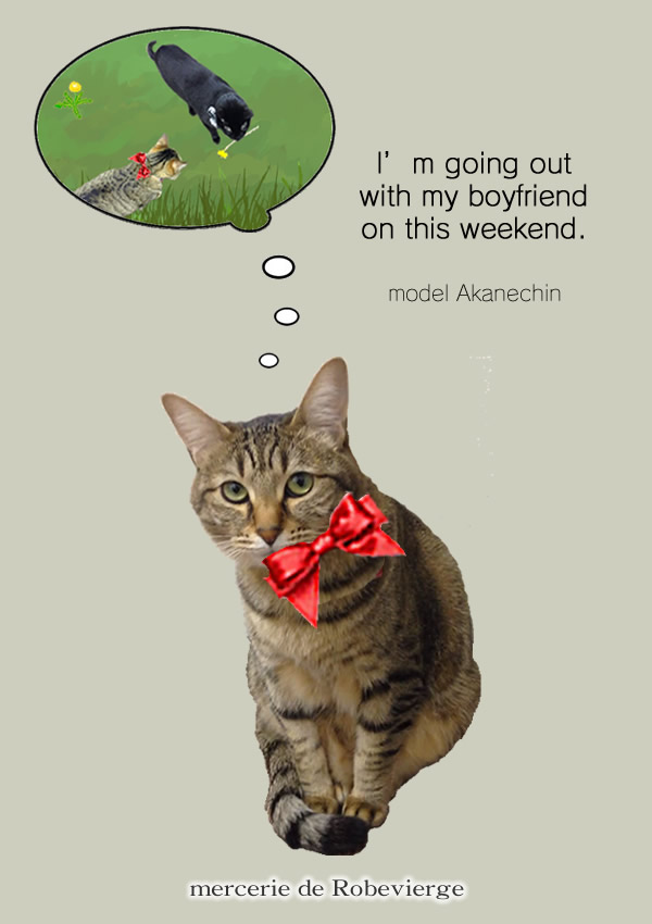 猫の赤いリボン