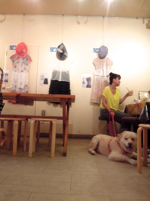 dogカフェの犬