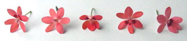 orange花