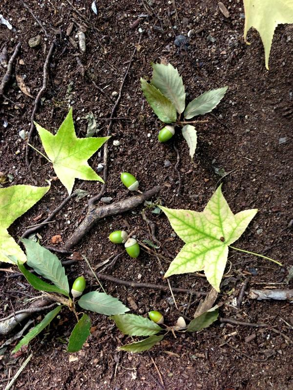 どんぐりと落ち葉