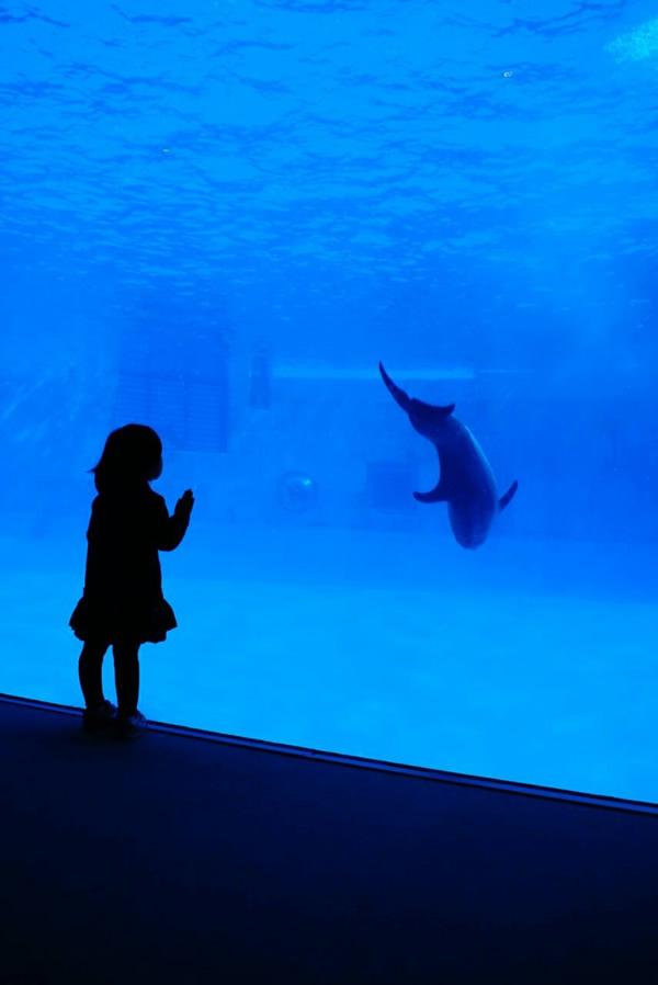 イルカと少女