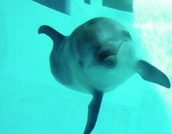 水族館の可愛いイルカ