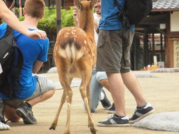 鹿の写真撮影会