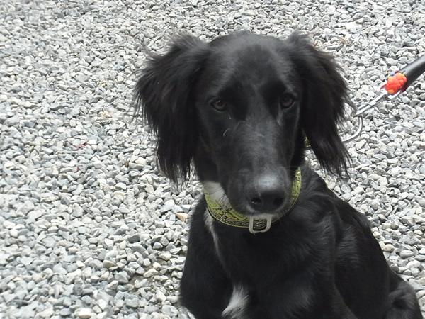 黒い可愛いMIX犬