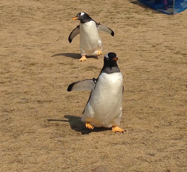 街を歩けばペンギン