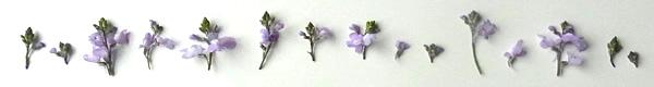 小さいお花たち