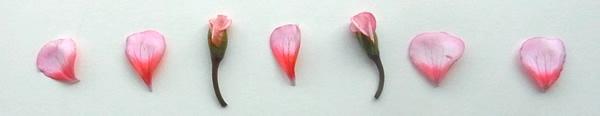 花びらと小花