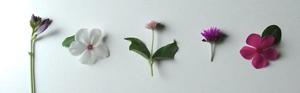 夏の小さな花