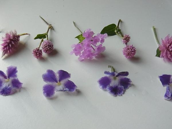 ピンクと紫の小花