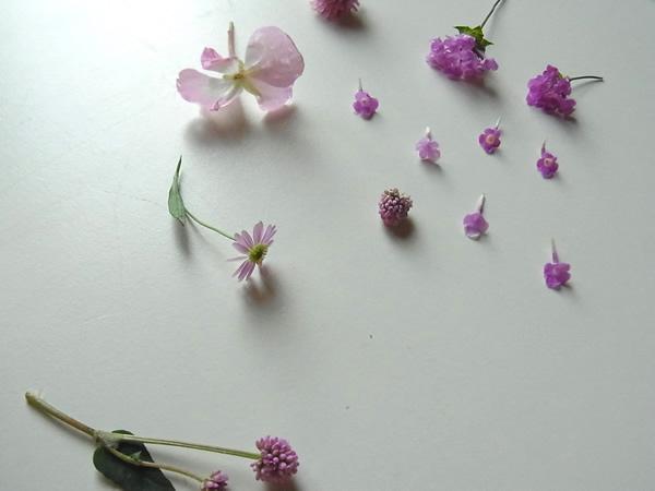 ピンクの小花たち