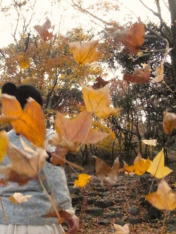 黄色の紅葉のNG写真