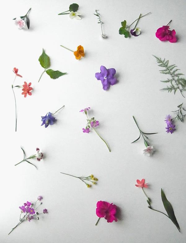 小さいお花