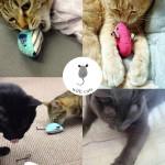 手作りねずみ with cats・動画